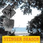 Queensland Stinger Season Port Douglas Cairns Australia