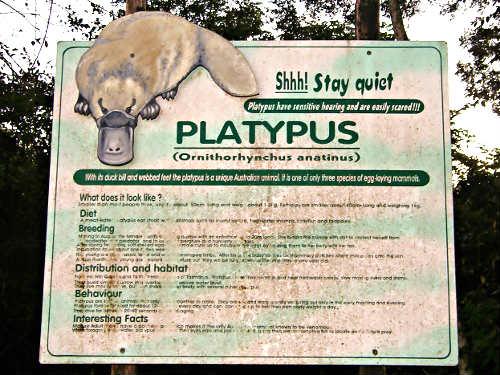 platypus sign