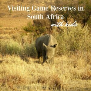 visiting game reserves in south africa with kids. rhino at Hluhluwe umfolozi game park