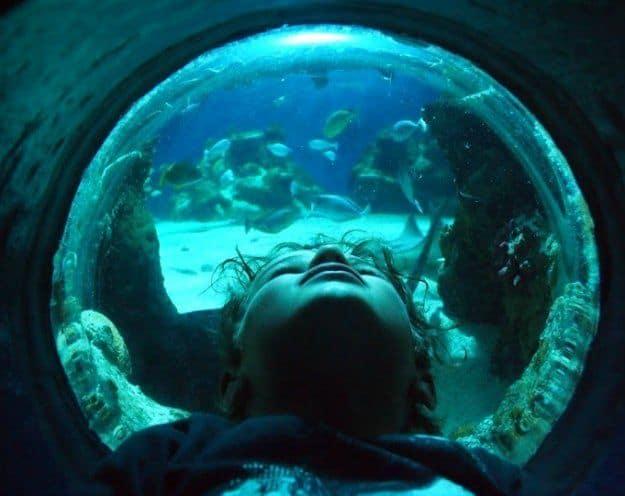 London with Children London aquarium
