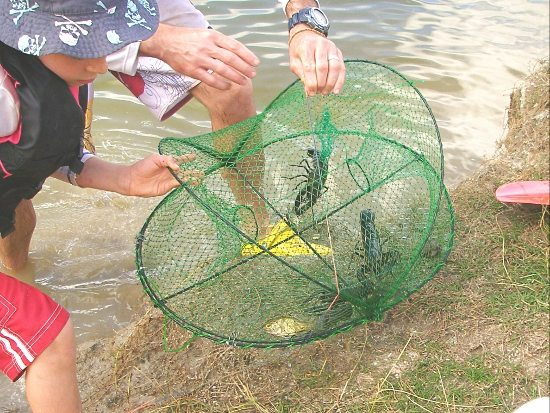 how to catch yabbies