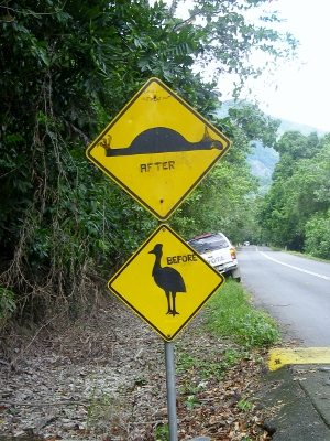 Cassowary crossing. Road sign, Port Douglas to Cooktown by four wheel drive