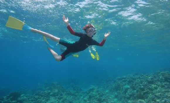 No sharks snorkelling the great barrier reef