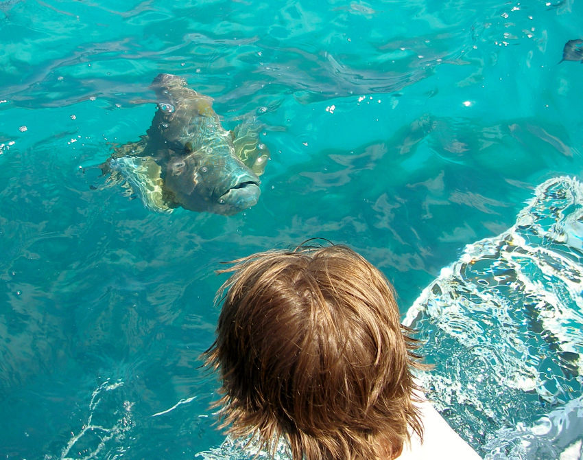Kids on the Great Barrier Reef entering the water with giant Maori wrasse fish