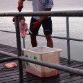 Port Douglas Australia groper