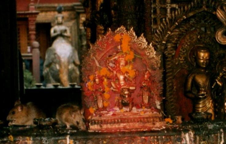 Rat Temple in Kathmandu