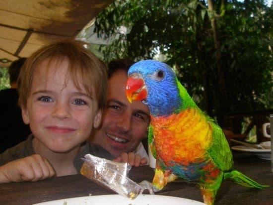 Wildlife Habitat Port Douglas Australia