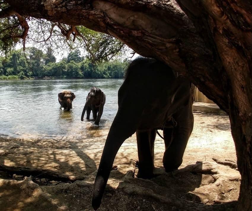 Elephants in Kanchanaburi Elephant World