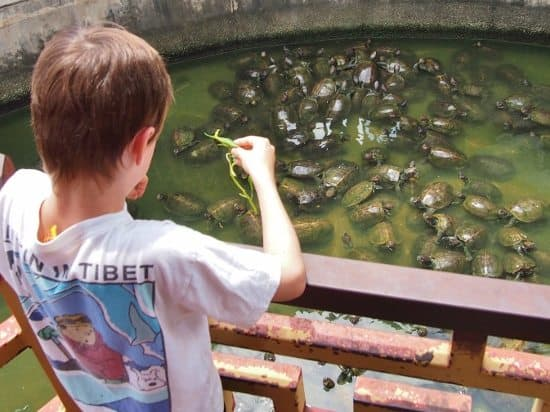 Feeding the turtles at Kek Lok Si Temple, Penang