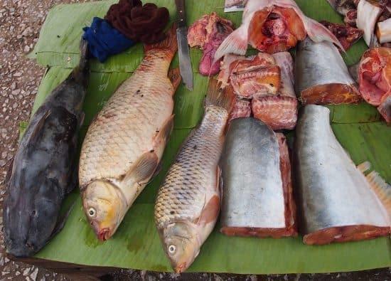 Luang Prabang market, fish for sale