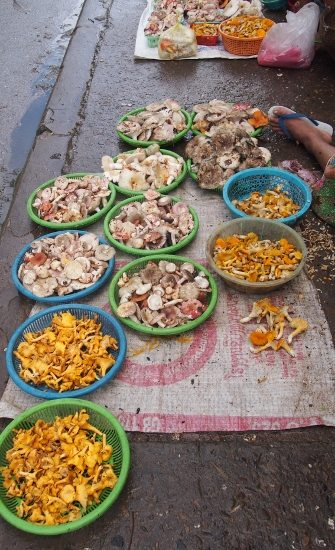 Luang Prabang Laos, freshly gathered mushrooms for sale on the street