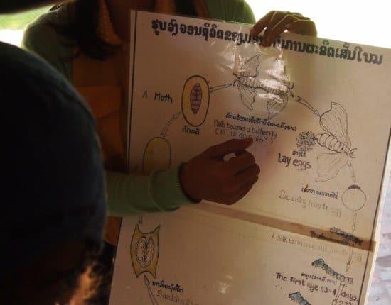 Ock Pop Tok Luang Prabang Silk Worm Life Cycle