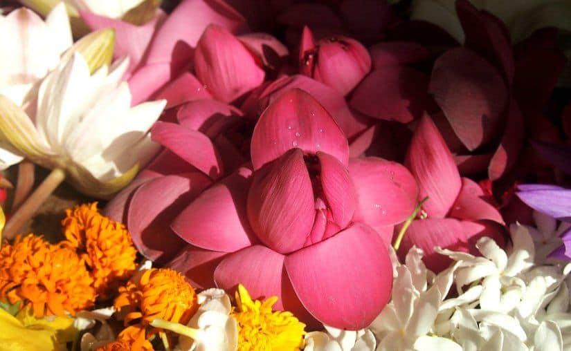 Sri Lanka travel blog guide temple flowers anuradhapura