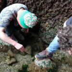 children rockpooling free things to do in the UK with kids british beaches