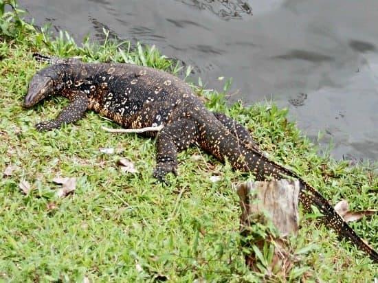 Things to do in Kandi Srilanka. Kandy Lake wildlife