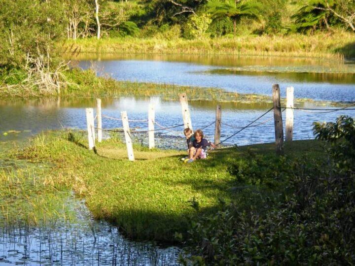 Things to do in Port Douglas Wild Platypus Local Wildlife