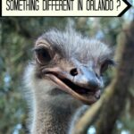 Things to Do in Orlando for Kids : Animal Farm