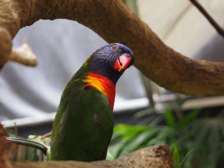 The wildlife Habitat Port Douglas is the best place to see Australian Wildlife
