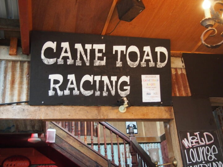 Things to do in Port Douglas See Cane Toad Racing