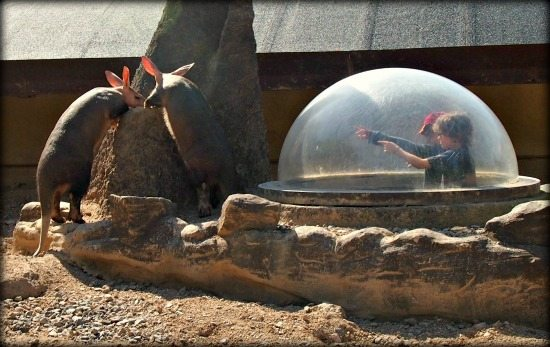 Visiting London Zoo With Kids Aaadvarks Tunnels