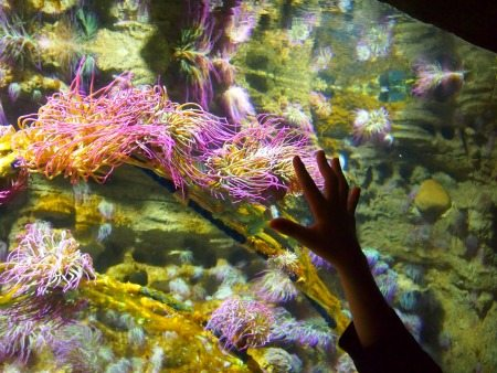 London Aquarium review blog family travel