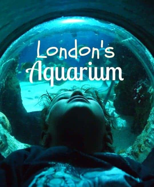 London Aquarium review. Sea Life London Family Travel BlogLondon aquarium review World Travel Family