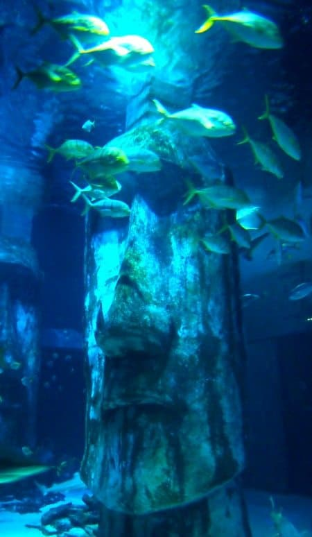 London aquarium review by world travel family travel blog for Moai fish tank
