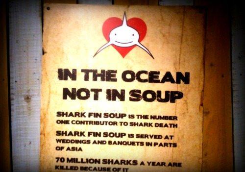 sharkfin soup 550