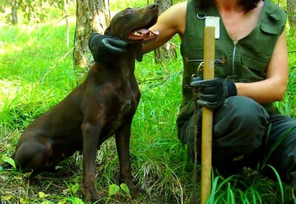 Truffle hunting in Italy dog