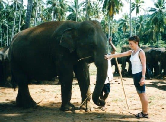 Best Places to Visit inSri Lanka Pinnewala Elephant Orphanage