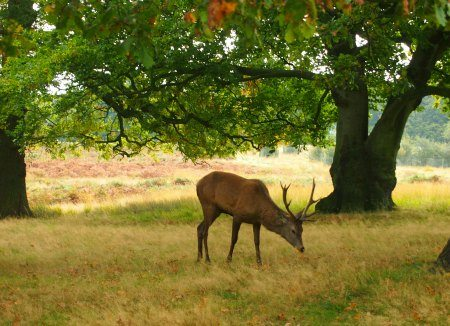 London for Kids Richmond Park