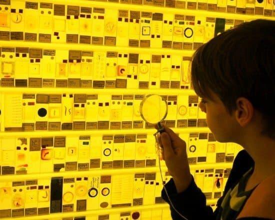 Freemuseum for kids Grant Museum London