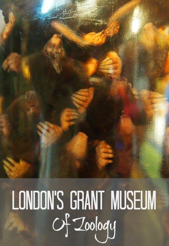 Jar of Moles. London Grant Museum of Zoology