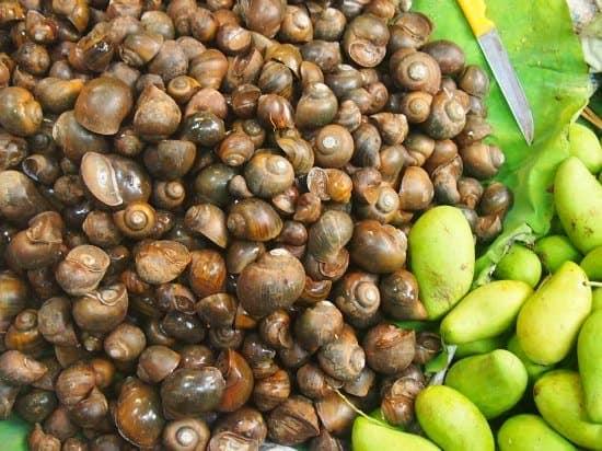 snails at a cambodian market battambang