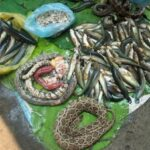 snake cambodian food market battambang
