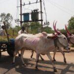 Visiting Hampi and Hampi to Goa