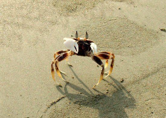 Wildlife Colva beach Goa