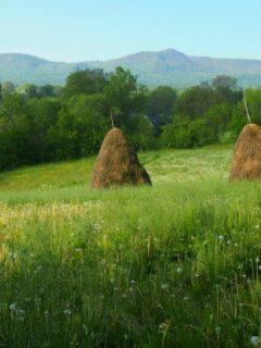 A meadow in a Romanian village