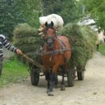 Living and Working in Breb, Romania.