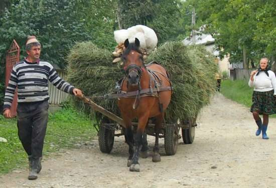 Romanian village life. A typical Romanian horse and cart, loaded with hay for the milking cows.