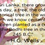 Kandy to Anuradhapura