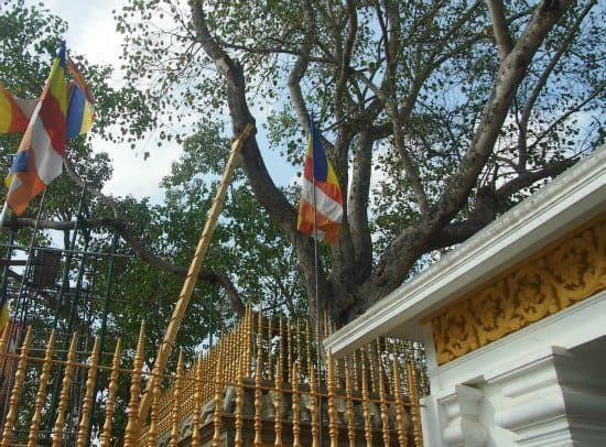Visiting Anurahadapura, ancient cities of Sri Lanka. The sacred Bo Tree of Buddha.