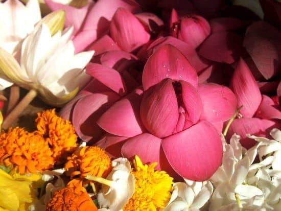 Offering flowers at Anuradhapura