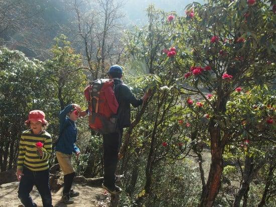 """尼泊尔与孩子们,加德满都与孩子们杜鹃花"""""""" class ="""" wp-image-24724"""