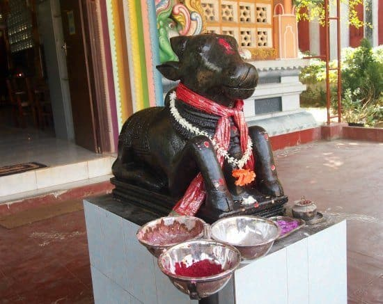 Getting to Jaffna, Sri Lanka. Things o do in Jaffna. Nandi Bull at Jaffna's main Hindu temple.