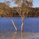 Getting to Fraser Island, Australia