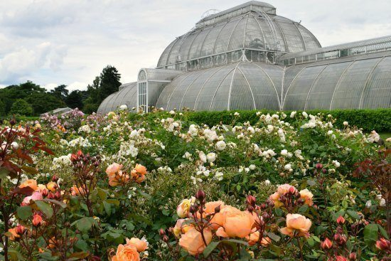 Kew Gardens tropical house and roses