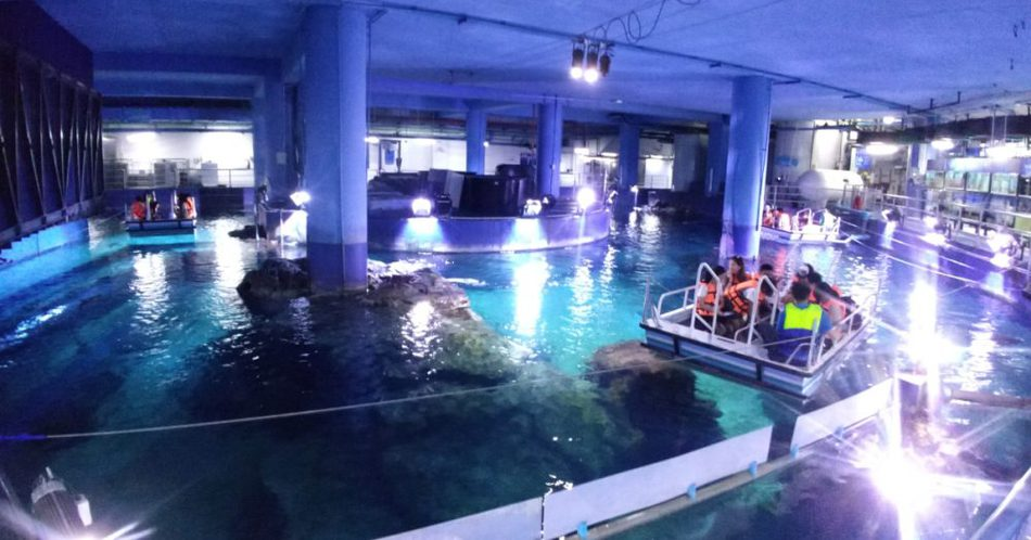 Things to Do in Bangkok visit Bangkok Aquarium