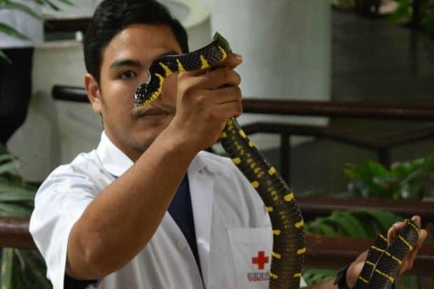 Snake Show Bangkok Hospital Snake Farm. Things to do in Bangkok