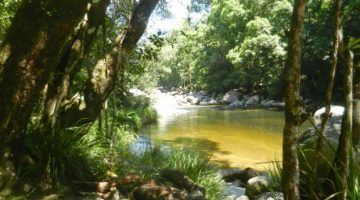 Mossman Gorge Fresh Water Swimming Hole Near Port Douglas